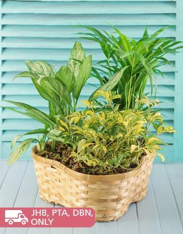 Basket3potplant