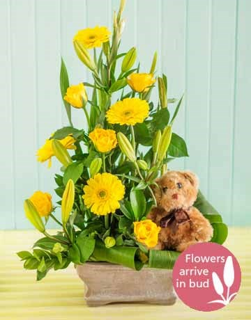 New Baby mixed flower arrangement with teddy bear