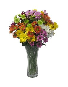 Chrysanthemum daisies in a glass vase