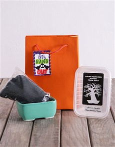 Lets Hang Out Bonsai Tree Growth Kit!