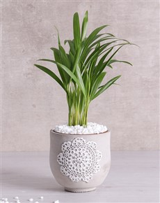 Love Palm in Grey Patterned Vase!