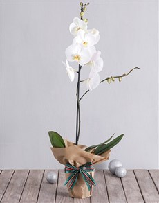 White Phalaenopsis Orchid in Craft Paper!