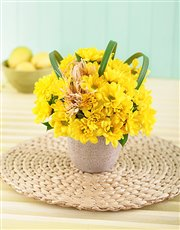Yellow Daisies in a Pottery Vase Petite