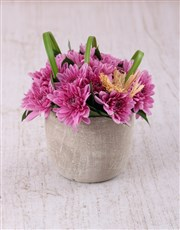 Pink Daisies in a Pottery Vase Petite