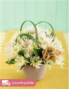 White Daisies in a Pottery Vase Petite