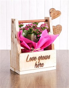 Love Grows Here Kalanchoe Crate!