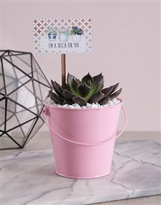 Succa For You Pink Succulent Bucket!