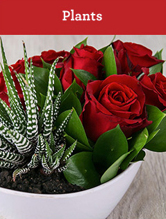 NetFlorist | Valentine's Day Plants