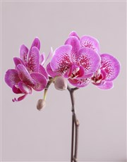 Miniature Pink Orchid in Craft Paper