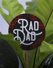 Rad Dad Asplenium Nidus