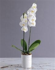 A beautiful white glazed vase, circular shape hold