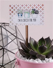 Succa For You Pink Succulent Bucket
