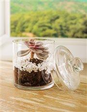 Succulent in a Medium Jar