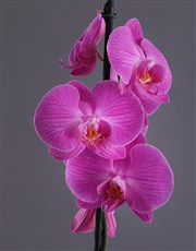 Send beautiful bright and exotic blooms of a two s
