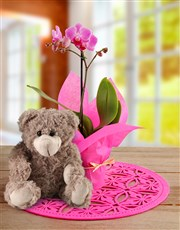 Midi Phalaenopsis Orchid Wrapped in Pink