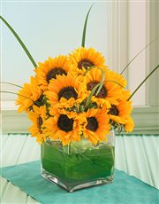 Sensational Sunflowers in a Square Glass Vase