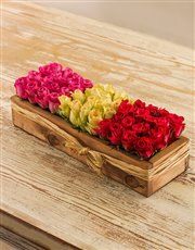 Grouping Pink, Red & White Roses in a Crate