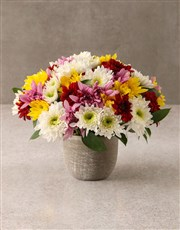 Rock The Daisies Vase