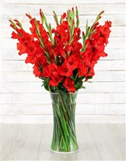 A tall glass vase of spectacular red gladiolus fin