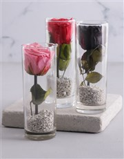 Small Cylinder Vase With A Preserved Rose