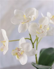 Silk Phalaenopsis Orchid in a Clear Vase