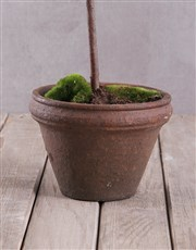 Small Potted Silk Olive Topiary