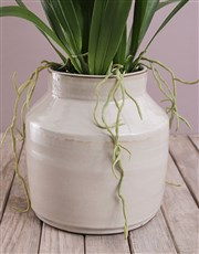 Silk Dancing Lady Orchid in a Reactive Ceramic Pot