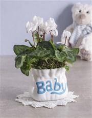 Cyclamen in Baby Pottery