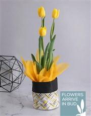 Yellow Tulip in Fabric Pot Cover