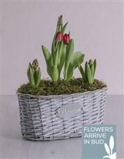 Mediterranean Basket Planter