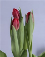 Red Tulips in Heart Pot