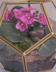 Glamorous African Violet Terrarium