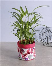 Indoor Areca Bamboo Planter