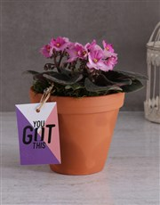 African Violet for Secretary's Day