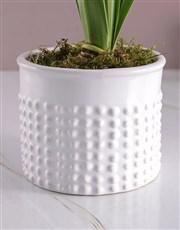 Graceful Begonia in White Vase