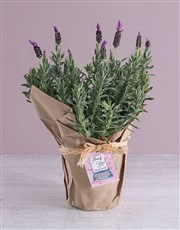 Motivation Lavender Pot