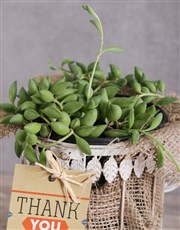 String of Pearls Plant in a Birdcage