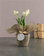 Popcorn Daffodil Plant in Brown Raffia Paper