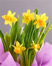 Happy Birthday Yellow Daffodils In Lilac Wrapping