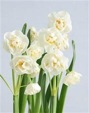 Popcorn Daffodil Plant in Polka Dot Pot