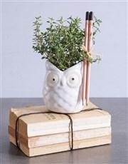 Teacher's Day Thyme in an Owl Pot