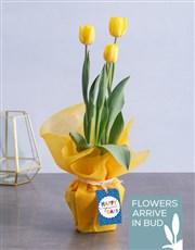 Happy Yellow Tulips