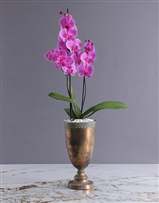 Orchid in Silver Globe