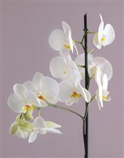 Orchid in Grey Flower Basket