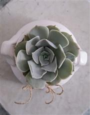 Succulent in a Mini Milk Can Planter