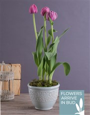 Lilac Tulips in a French Country Pot