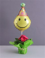 Wrapped Gerbera Plant for a Birthday