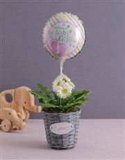 Baby Girl Gerbera Plant in a Basket