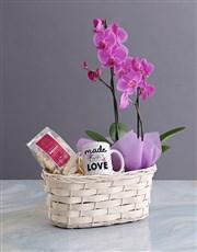 Phalaenopsis Orchid Gift Basket