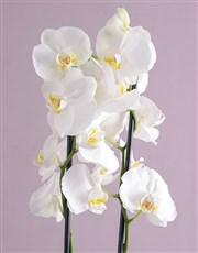 Personalised Orchid Pot Plant